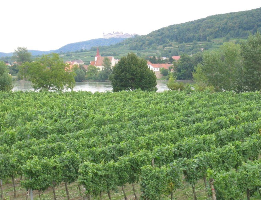Día 8: Etapa en bicicleta Melk-Krems (45 km)
