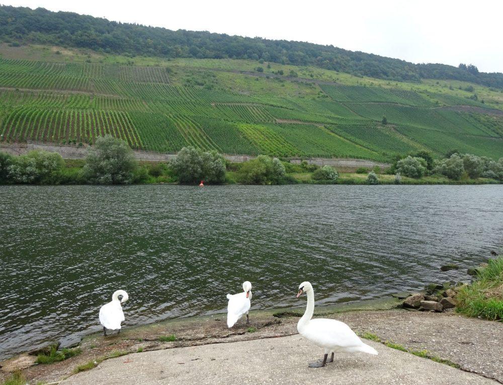 Ruta río Mosela. De Trier a Coblenza por M. Luz Campos
