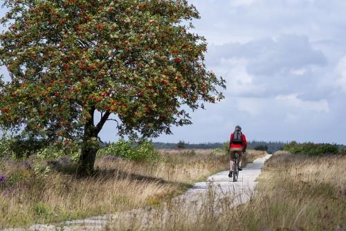 Vacaciones en bici
